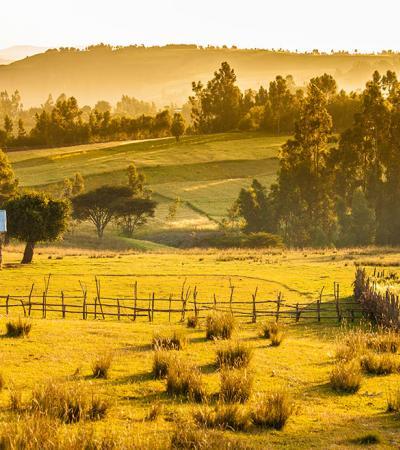 Farms in Ethiopia